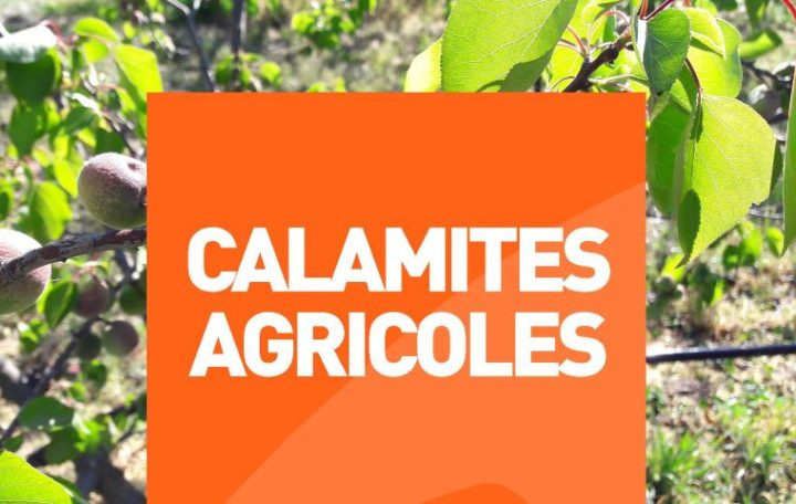 Procédure de calamité agricole suite au gel du 4 au 8 avril 2021 - fruit à noyau