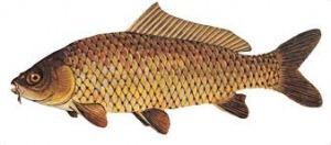 Ouverture d'une école de pêche - Gaule Cazouline